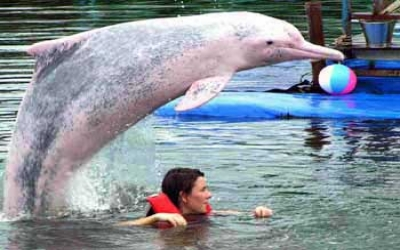 swimming_with_dolphin