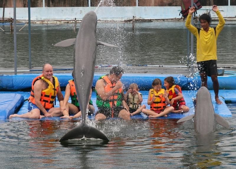 swimwithdolphinsthailand