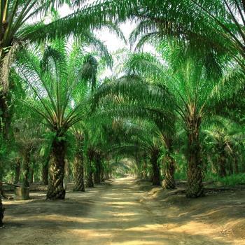 plantations Parapat